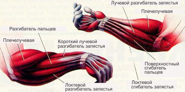 Kaed harja liigese kaega paindumisel Spin massaaz valutab