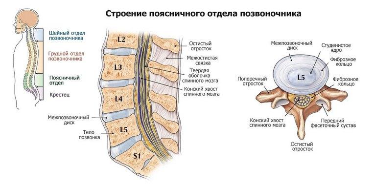 Mis on kate kate liigeste haiguste nimi