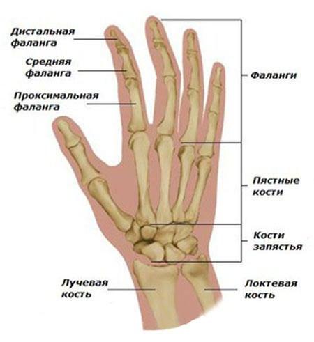Valu keskmise sorme harja liigesevalu Anesteesia plock
