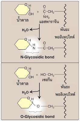 Chondroitiini ja glukoosamiini eelised
