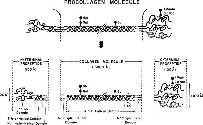 Proceness Gel aitab osteokondroosiga kus krooniline artriit toodeldakse