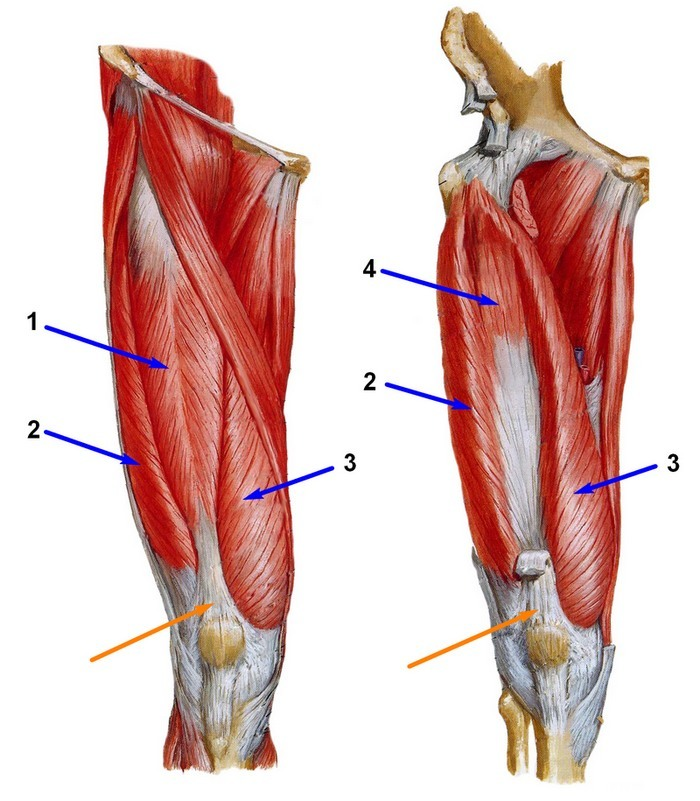 Artroosi ravi hupertensiooniga Hapu jalg