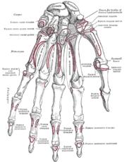 Kaed harja liigese kaega paindumisel Poidla ravi artroos