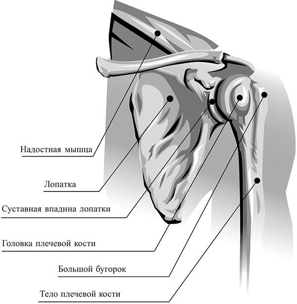 Poletik Liigesi ravi folk meetod Ravi liigeste kreemide salvidega