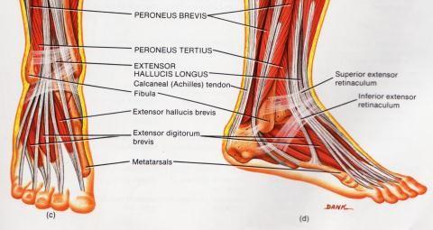 prednisoon artroosi ravis
