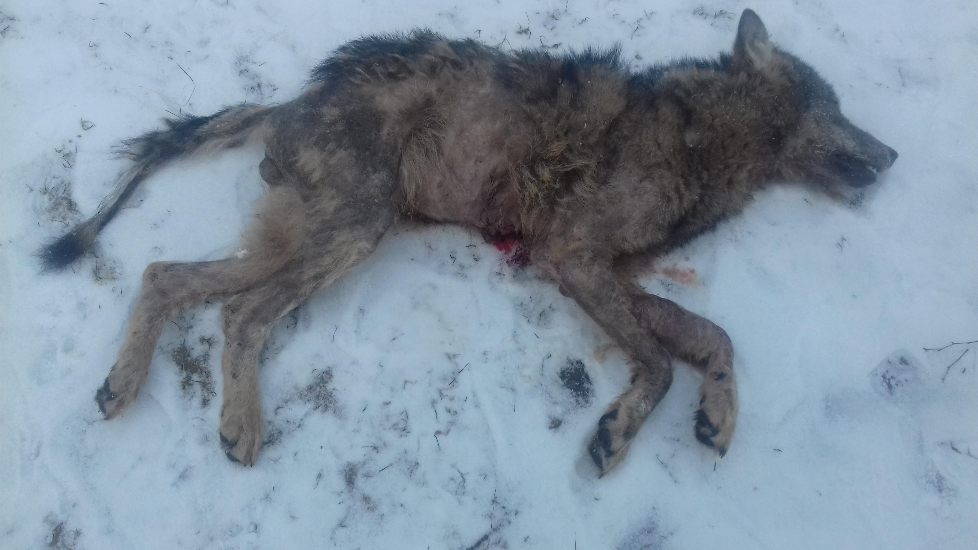 Sulges haiget Hunt
