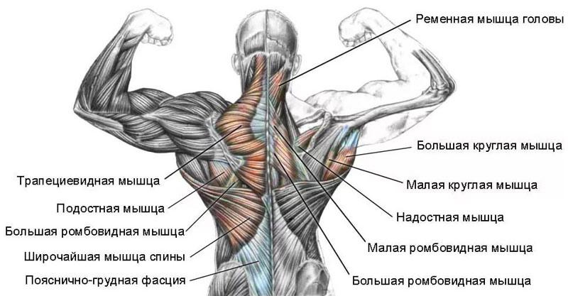 Kapslid liigeste artroosi eest Artrohi ravi kaerahelbedega
